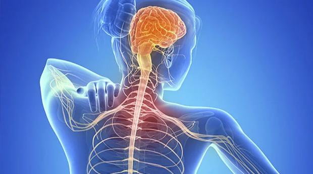 Научно-практическая конференция «Органическое и функциональное в неврологии»