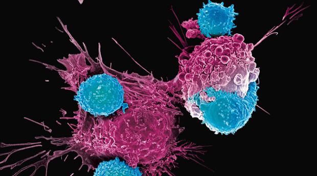 Научно-практическая Конференция «Гормональная терапия рака предстательной железы»